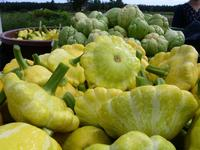 Good quality cucurbit fruits